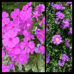 New Phototastic Collage Flowers (04)